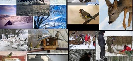 """Konkurs na wykonanie plakatu pt. """"Pomagam zwierzętom przetrwać zimę"""""""
