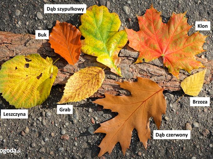 Jesienią liście są najpiękniejsze.